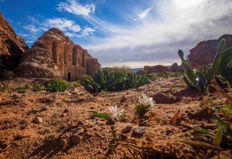 The 2017 Field Biology program will return to Jordan for the 2017 spring semester.