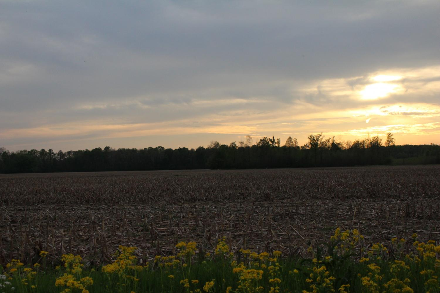 Anna Hall, agriculture education junior at Purdue University, said Southern Indiana farmers who sell locally typically have smaller farms with only a few acres of land, such as the one pictured, located in Scottsburg, Indiana.