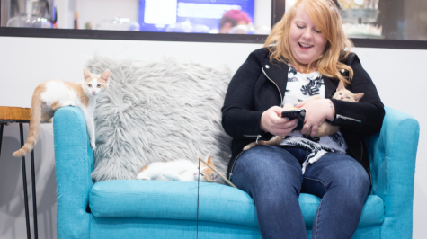 A cat lounge visitor shares a couch with three kittens eager to find their forever home.