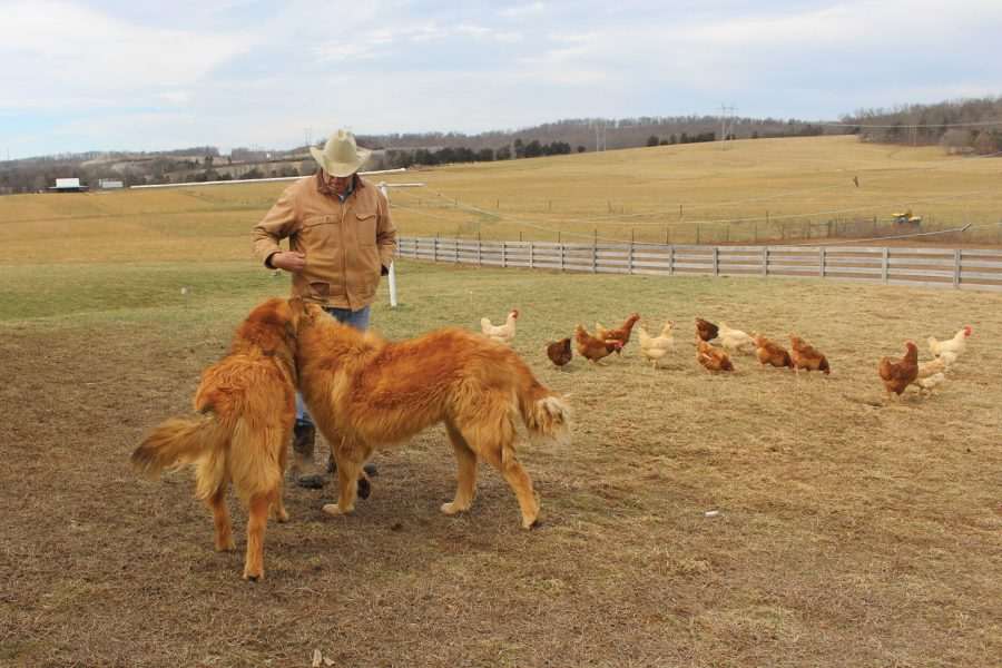 Steve Carr tends to his two chicken coop guard dogs, Bear and Ranger.