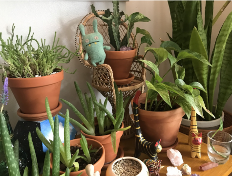 Public relations senior Maggie Klein poses plants and her childhood gifts together on one bookshelf as a means of organizing special spaces to enjoy in her home.
